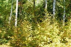 Πράσινος ο θάμνος Στοκ Φωτογραφίες