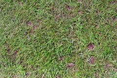 Πράσινος ο χορτοτάπητας με τα φαλακρά σημεία στοκ φωτογραφίες με δικαίωμα ελεύθερης χρήσης
