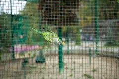 Πράσινος παπαγάλος σε ένα κλουβί στο ζωολογικό κήπο Στοκ φωτογραφίες με δικαίωμα ελεύθερης χρήσης