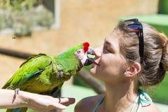 Πράσινος παπαγάλος που φιλά ένα κορίτσι - ζώα αγάπης Στοκ φωτογραφίες με δικαίωμα ελεύθερης χρήσης