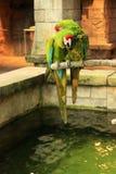 Πράσινος παπαγάλος δύο Στοκ εικόνα με δικαίωμα ελεύθερης χρήσης