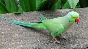 πράσινος παπαγάλος στοκ εικόνες