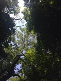 πράσινος παράδεισος Στοκ Εικόνα