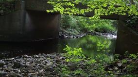 Πράσινος ποταμός κάτω από τη γέφυρα απόθεμα βίντεο
