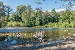 Πράσινος ποταμός που τρέχει χαμηλά Στοκ φωτογραφία με δικαίωμα ελεύθερης χρήσης