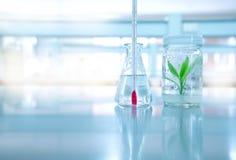 Πράσινος πολιτισμός εγκαταστάσεων ιστού στο γυαλί μπουκαλιών με το θερμόμετρο στο φ στοκ εικόνες