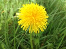 Πράσινος πλανήτης και κίτρινο λουλούδι στον κήπο Στοκ φωτογραφία με δικαίωμα ελεύθερης χρήσης