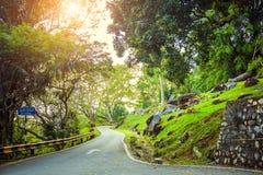 πράσινος δρόμος τροπικών δ Στοκ Εικόνες