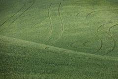 πράσινος σίτος πεδίων Στοκ εικόνα με δικαίωμα ελεύθερης χρήσης