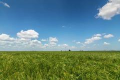 πράσινος σίτος τοπίων πεδί&o πράσινος σίτος πεδίων Στοκ εικόνα με δικαίωμα ελεύθερης χρήσης