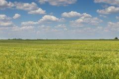 πράσινος σίτος τοπίων πεδί&o πράσινος σίτος πεδίων Στοκ εικόνες με δικαίωμα ελεύθερης χρήσης