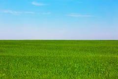 Πράσινος σαφής τομέας στοκ εικόνες