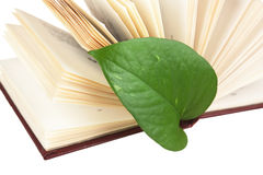 Πράσινος σελιδοδείκτης φύλλων σε ένα βιβλίο Στοκ Φωτογραφίες