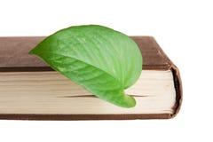 Πράσινος σελιδοδείκτης φύλλων σε ένα βιβλίο Στοκ Εικόνες