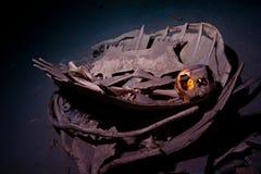 Πράσινος σκελετός χελωνών με το υποβρύχιο εσωτερικό cav κρανίων Στοκ Εικόνες