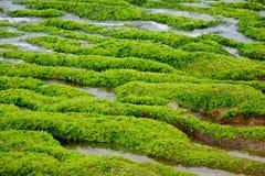 πράσινος σκόπελος Στοκ φωτογραφίες με δικαίωμα ελεύθερης χρήσης