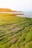 πράσινος σκόπελος Στοκ φωτογραφία με δικαίωμα ελεύθερης χρήσης