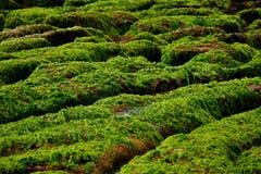 πράσινος σκόπελος Στοκ εικόνες με δικαίωμα ελεύθερης χρήσης