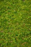 πράσινος σκόπελος Στοκ εικόνα με δικαίωμα ελεύθερης χρήσης