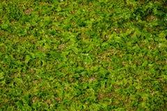 πράσινος σκόπελος Στοκ Εικόνες