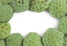 Πράσινος σπόρων Lotus που απομονώνεται Στοκ εικόνες με δικαίωμα ελεύθερης χρήσης