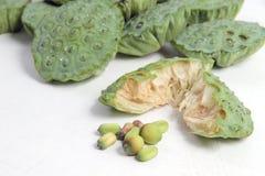 Πράσινος σπόρων Lotus που απομονώνεται Στοκ εικόνα με δικαίωμα ελεύθερης χρήσης