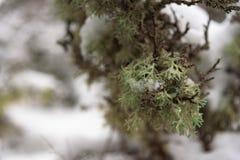 Πράσινος στενός επάνω βρύου Στοκ εικόνα με δικαίωμα ελεύθερης χρήσης