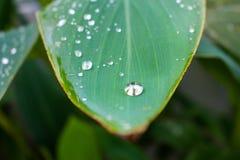 Πράσινος στενός επάνω πτώσης φύλλων και νερού στοκ εικόνες