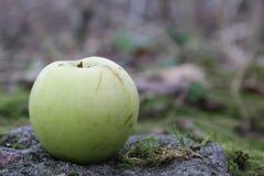 Πράσινος στενός επάνω της Apple το φθινόπωρο Στοκ φωτογραφίες με δικαίωμα ελεύθερης χρήσης