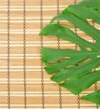 Πράσινος στενός επάνω φύλλων Στοκ Εικόνες