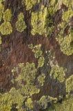 Πράσινος σχηματισμός λειχήνων πέρα από μια κατασκευασμένη καφετιά πέτρα Στοκ εικόνες με δικαίωμα ελεύθερης χρήσης