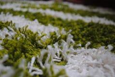 Πράσινος τάπητας για το σπίτι Στοκ εικόνες με δικαίωμα ελεύθερης χρήσης