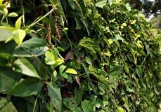 Πράσινος τοίχος ιδεών κηπουρικής στοκ φωτογραφία