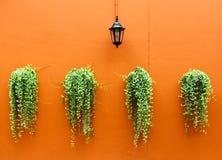 πράσινος τοίχος φυτών λαμπτήρων παλαιός Στοκ Φωτογραφίες