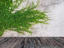 Πράσινος τοίχος φύλλων και παλαιό ξύλινο πάτωμα για το υπόβαθρο Στοκ φωτογραφία με δικαίωμα ελεύθερης χρήσης