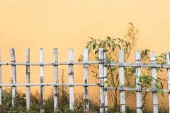 Πράσινος τοίχος χλόης στον κήπο Στοκ Εικόνες