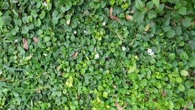 πράσινος τοίχος Στοκ Φωτογραφίες