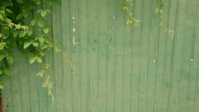 πράσινος τοίχος Στοκ φωτογραφίες με δικαίωμα ελεύθερης χρήσης