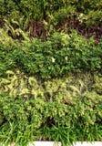 πράσινος τοίχος Στοκ φωτογραφία με δικαίωμα ελεύθερης χρήσης