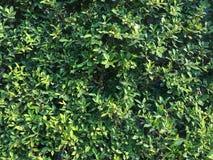 πράσινος τοίχος Στοκ εικόνες με δικαίωμα ελεύθερης χρήσης