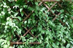 πράσινος τοίχος Στοκ Εικόνα