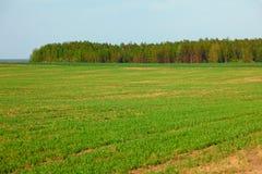 Πράσινος τομέας άνοιξη των συγκομιδών και του άλσους Στοκ Εικόνες
