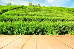 Πράσινος τομέας δέντρων τσαγιού με το ξύλινο πεζούλι Στοκ Εικόνες