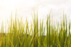 Πράσινος τομέας στοκ εικόνα με δικαίωμα ελεύθερης χρήσης