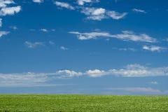 Πράσινος τομέας κάτω από το τοπίο μπλε ουρανού στοκ φωτογραφία