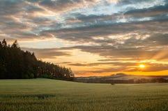 Πράσινος τομέας με το δάσος στο ηλιοβασίλεμα στοκ εικόνα