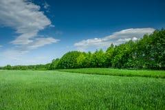 Πράσινος τομέας με το σιτάρι, το δάσος και τα σύννεφα σε έναν μπλε ουρανό στοκ φωτογραφία με δικαίωμα ελεύθερης χρήσης