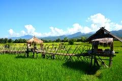Πράσινος τομέας ρυζιού με την ταϊλανδική καλύβα Στοκ Εικόνες