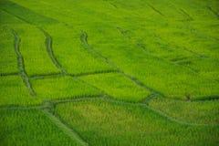 Πράσινος τομέας ρυζιού σε Chiang Mai Ταϊλάνδη, τομείς ρυζιού στην απαγόρευση PA Π Στοκ φωτογραφία με δικαίωμα ελεύθερης χρήσης