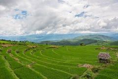 Πράσινος τομέας ρυζιού στο βουνό με την ομίχλη σε Chiang Mai Ταϊλάνδη, Ri Στοκ Φωτογραφίες